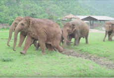 Elephants Run To Greet A New Rescued Baby Elephant At Refuge