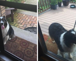Family Finds Strange Dog Barking Outside Door, Reason Why Will Melt Your Heart