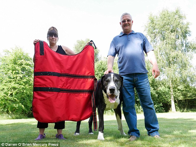 giant-terrier-4