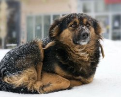 Awesome News! New law makes leaving dogs out in the cold a felony