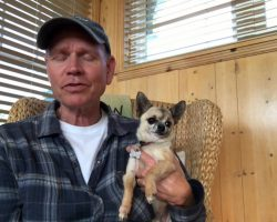 Man Says Petting His Chihuahua Is Relaxing. We (And The Chihuahua) Beg To Differ