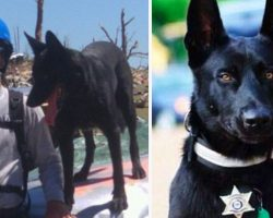 Three Men Drag Police Officer Into Forest To Kill Him, Don't See Dog's Reign Of Terror Coming