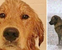 Man Saves Sick Homeless Dog After A Flood, Days Later He's Shaken By What He Finds In His Fur