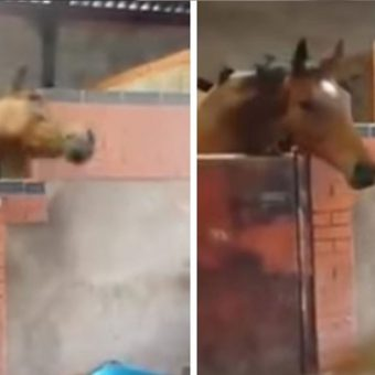 "She Starts Dancing To ""All About That Bass,"" Now Watch What Her Horse Does …I'm CRYING!"