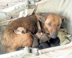Stray Dog Uses Her Maternal Instincts To Keep An Abandoned Baby Alive Until Help Arrives