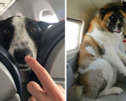 22 Times People Bumped Into The Cutest Passengers On Flights