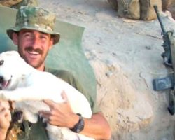 Marine Breaks Rules To Rescue Stray Dog Overseas, Dog Returns The Favor When He's Back Home
