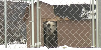 New Law Makes It A Felony To Leave Dogs Outside In The Cold