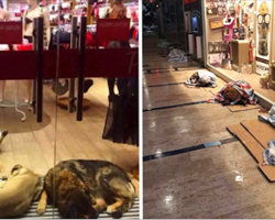 These Store Owners Are Doing The Nicest Things For Stray Dogs During Snowstorm