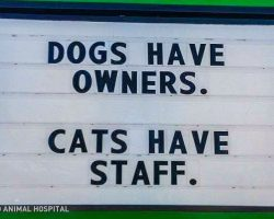 20 Vet Signs To Prove That Working With Animals Brings Out A Lot Of Hilariousness