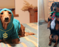 25 Dachshunds Who May Be Small But Have Larger Than Life Personalities
