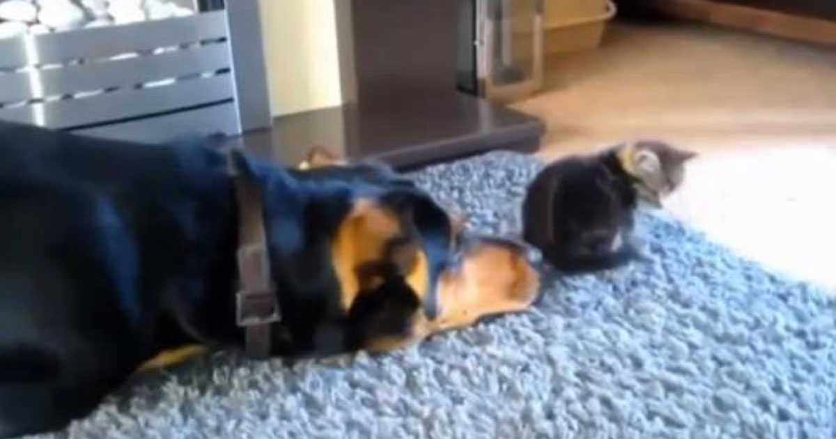 Dog S Owner Gives Food To Cat