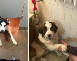 15 Dogs Who Won't Let Their Owners Use The Bathroom Alone