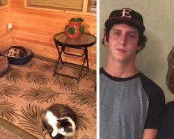 Grandma Takes Care Of Stray Cat. Grandson Dies Of Laughter When He Learns It's Not A Cat At All