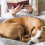 Would most dog owners rather hang out with their pet than people? Here's what the study said…