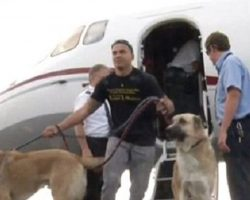 Airline Refuses To Fly Marine's Dogs To New Base, So Heiress Charters Private Jet