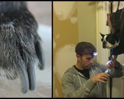 Dog Hates Getting His Nails Clipped So Dad Cuts Holes In Purse For 'Clever' Grooming Hack