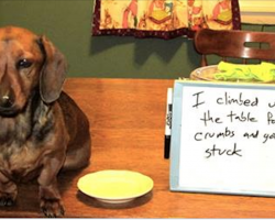 12 Facts Dachshund Lovers Know By Heart