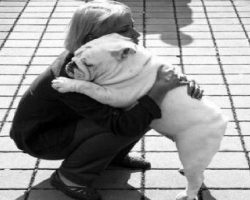 20 Things All English Bulldog Owners Must Never Forget. The Last One Brought Me To Tears…