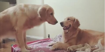 Daddy Dog Asks To Say 'Hello' To His Puppies
