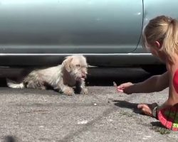Dog Who Lived On The Streets Since A Puppy Finally Rescued After 7 Months