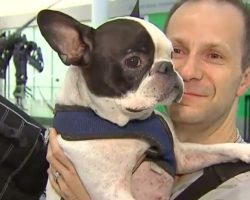 Air Canada Pilot Diverts Plane To Save Dog's Life