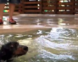 Cute Dachshunds Have An Awesome Pool Party