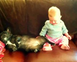 Baby Girl Sees French Bulldog Snoring During Nap And Cannot Stop Giggling!