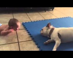 This French Bulldog Knows How To Entertain A Baby, And It's Hilarious!