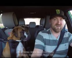 Boxer Dog And Drift Champion Vaughn Gittin Jr Get Nuts in a Ford Fiesta ST!