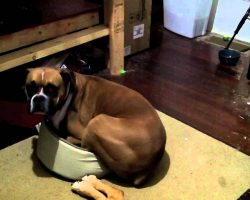 Boxers Can Be Greedy. What This Boxer Did Takes It One Step Further…