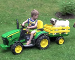 Little Boy Giving His Pug a Ride on His John Deere Tractor Is Too Sweet!