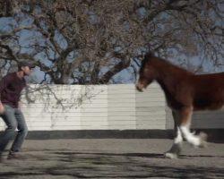 "Budweiser Unveils Super Bowl Commercial ""Brotherhood"""