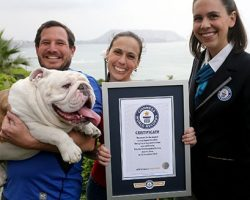 Bulldog Sets New Guinness World Record For THIS