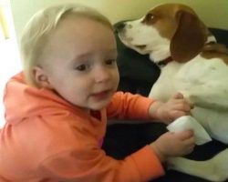 This Little Girl And Her Dog Are Best Friends. What They Do Together Will Melt Your Heart