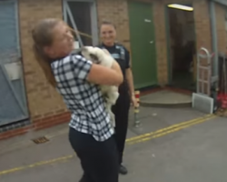 Check Out How Excited This Stolen Pug Is To Be Reunited With Her Owner