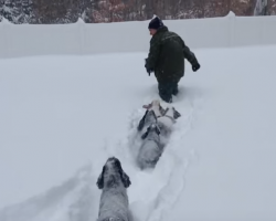 [Video] Cocker Spaniels Chase After Their Dad In Blizzard Snow