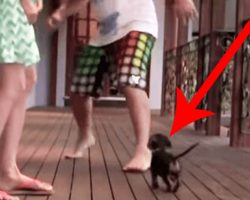 Dachshund Puppy Protects Woman When He Sees Her Being 'Attacked'