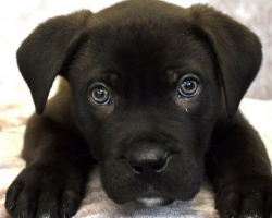 Bought Online As A X-Mas Gift, 8-Week-Old Ronnie Becomes First Dog To Be Abandoned In The New Year