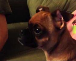 Dog Has Emotional Reaction Watching Disney's 'The Lion King'