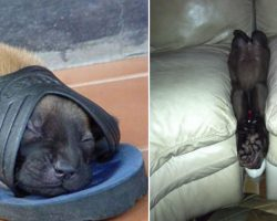 15 times that we caught dogs falling asleep in the funniest of places