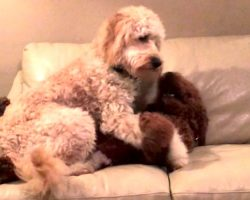 Sweet Dog Comforts Her Friend Having A Nightmare