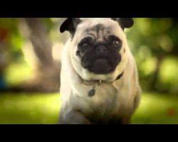 "DORITOS Unveils Superbowl Commercial ""Pug Attack"""