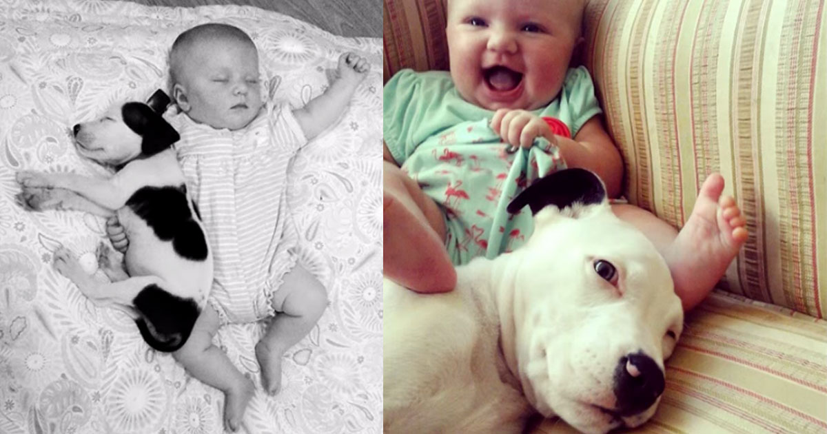 pit bull puppy and baby grow up together no words can describe
