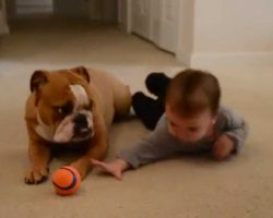 English Bulldog And Baby Playing Is Just So Sweet And Beautiful!