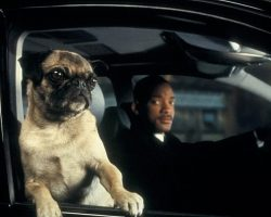 "Frank The Pug Sings THIS Song In ""Men In Black 2"", And It's Hilarious!"