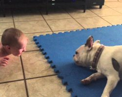 French Bulldog spins around in circles as it makes a six-month-old baby giggle in delight