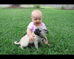 [VIDEO] This Funny Pug and Baby Video Compilation Will Make Your Day!