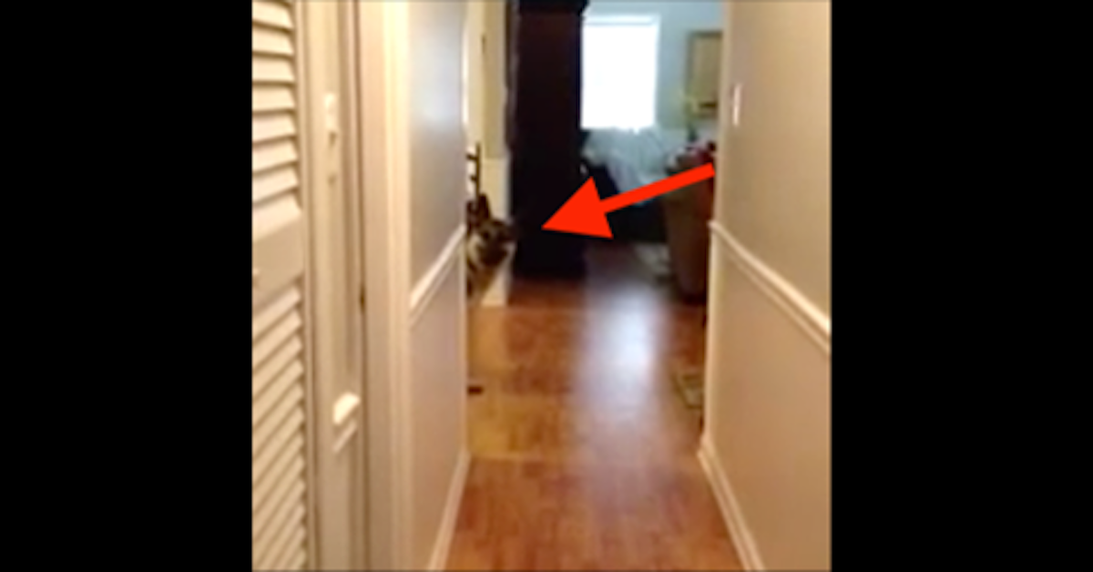 German Shepherd Scared Of Slippery Floor Comes Up With The Perfect