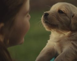 Story of a Lifelong Friendship Between a Girl and Her Dog Is Heartmelting